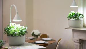 Grow Veggies & Herbs In Your Kitchen