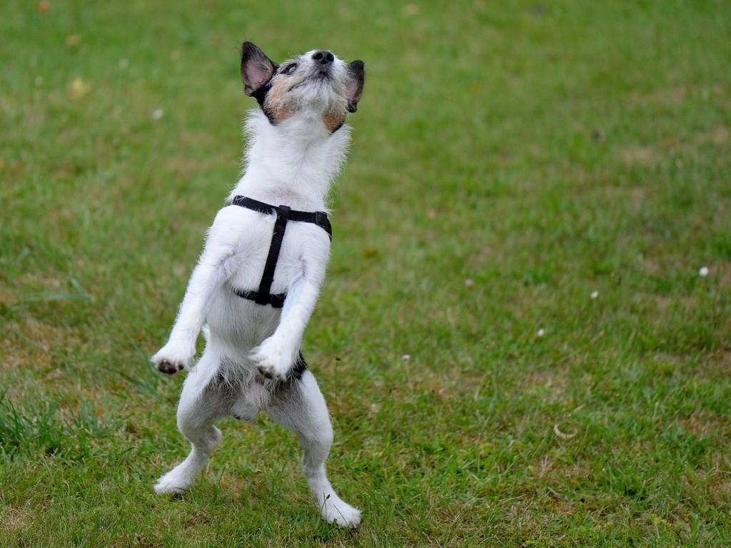 Dogs jump for joy