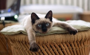 cat relaxing on a couch