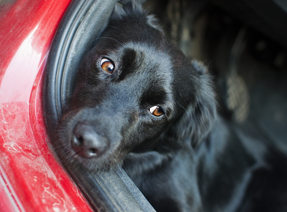 Black dog relaxed in car booth
