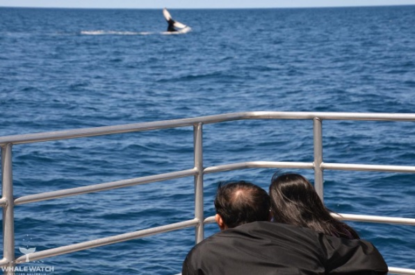 couple in a boat looking at whale in the ocean