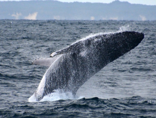 5 Best Places to Go for Whale Watching in Western Australia