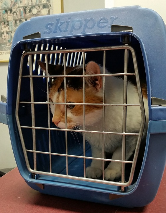 Get your cat acquainted with the carrier