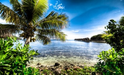 Fiji island with palm trees surrounded by water