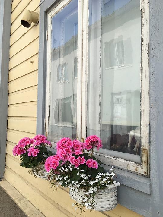 pink flowers on a window