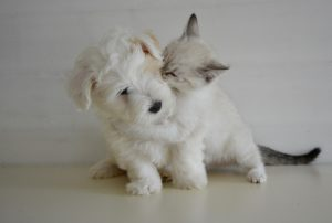 White dog and cat playing together