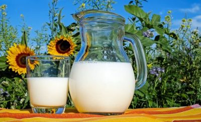 Ajar of milk with milk and a glass of milk in a background of sunflowers