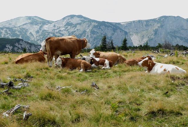 Organic Milk: The Principal Health Benefits
