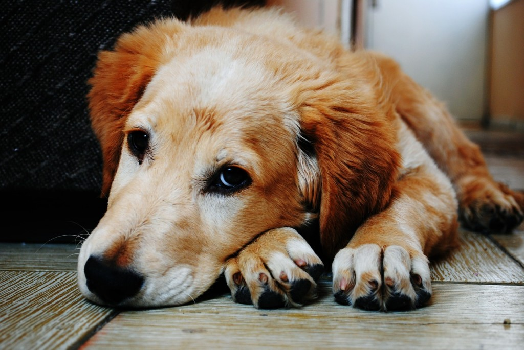 Dogs forgive and forget