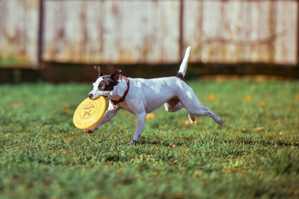 Dogs prioritise play/exercise