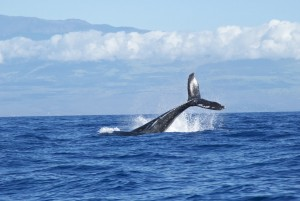 whale in middle of the ocean