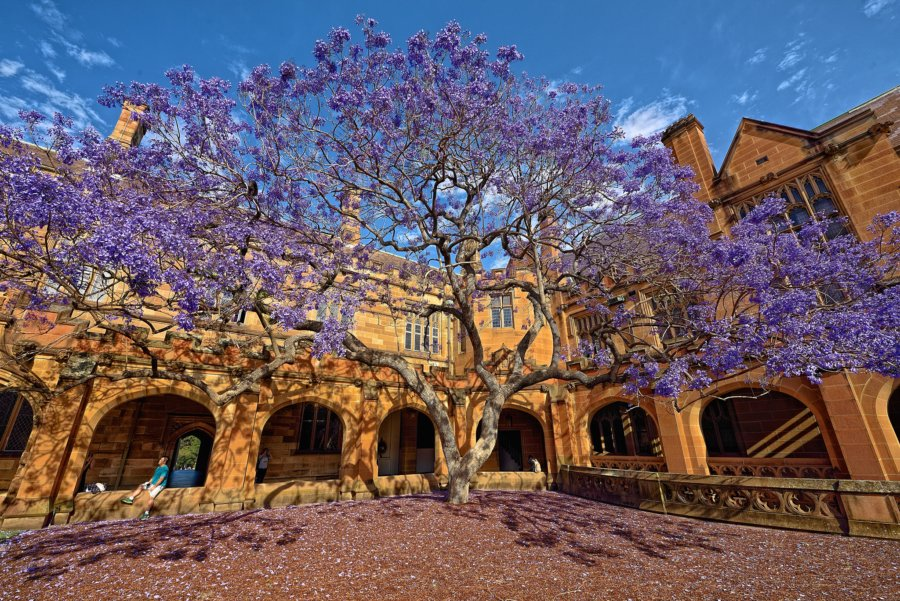 Top Instagram-Worthy Places to Visit in Sydney- University of Sydney