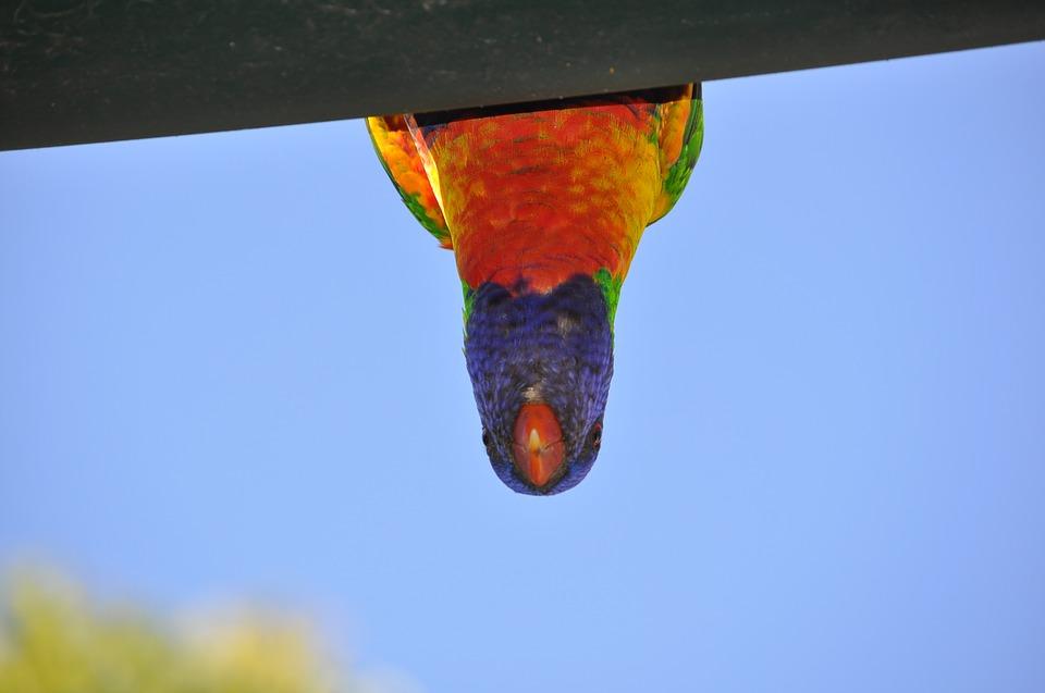 upside down parrot