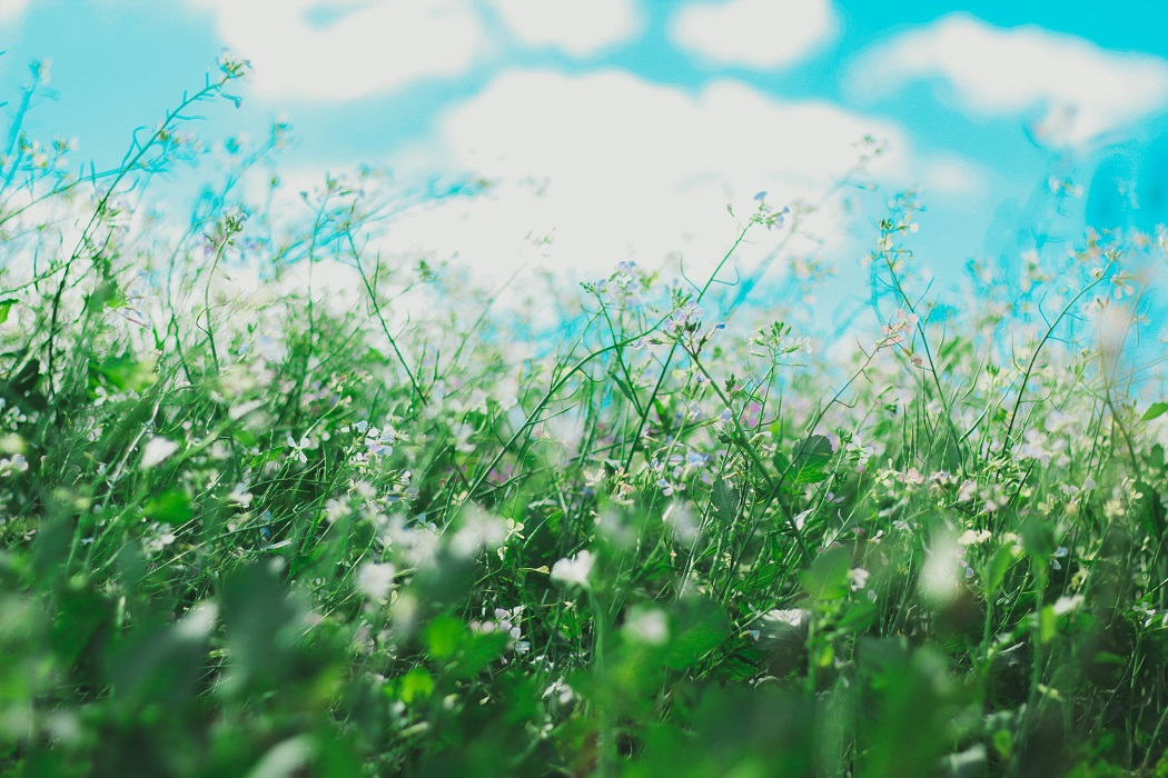 Tips for Dealing with your Kids' Allergies