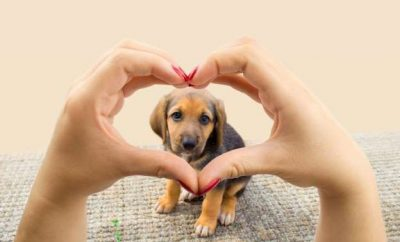 Looking at a dog through a heart shape pair of hands.