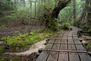8 Best Places To Visit For A First-Time Solo Woman Traveller-Yakushima, Japan