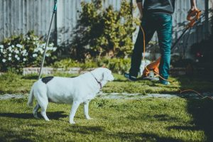 Summer is Coming! Prepare Your Yard With These Easy Steps- dog and owner in the garden