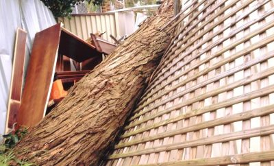 Emergency Tree Services By Professional Arborist Agencies