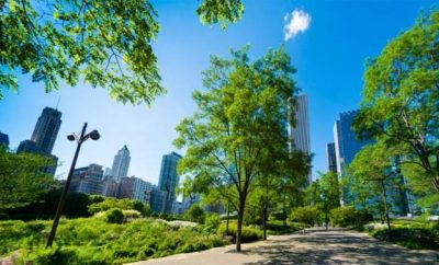 Greenery in the city, climate change