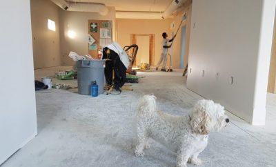 home renovation, small dog