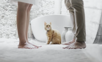 Couple legs and cat in the middle
