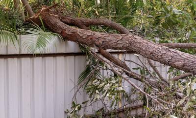 Fallen tree, tree on fence,