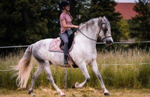 Riding-Horseback-Lessons