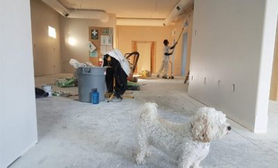 Home renovation, white dog in a renovation