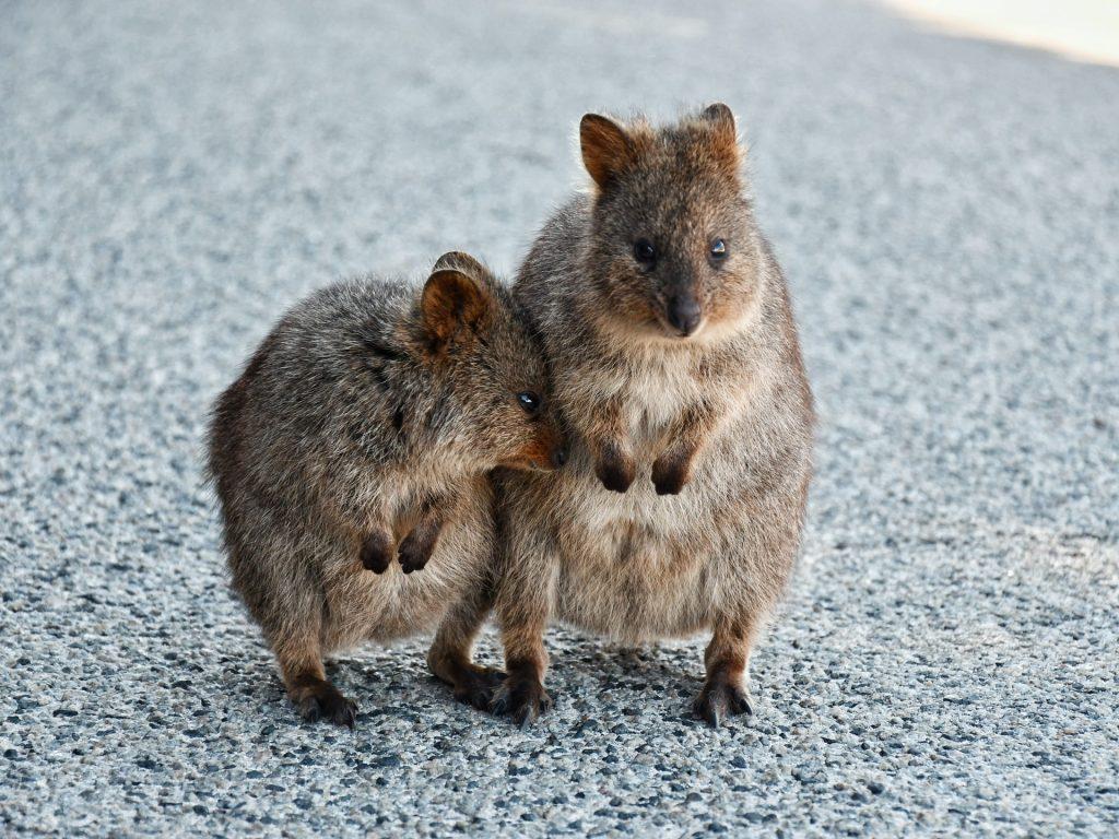 6 Astonishing Destinations to Visit in Australia