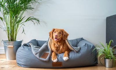 Dog in pet bed