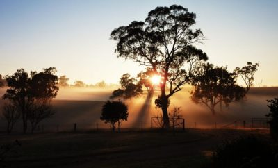 Sunset and Australian bush landscape